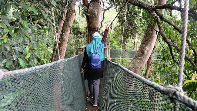 jambatan gantung canopy walk poring. Yang gayat jangan ikut.