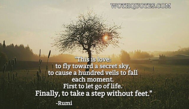 1000  images about RUMI LOVE POEMS on Pinterest