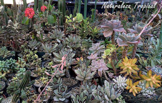 Colección de suculentas en jardín