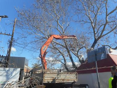 ΑΡΤΑ-Κοπή και κλάδεμα υψίκορμων δέντρων στο Δήμο