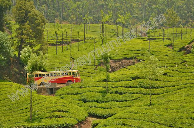 Bus Travel inside Munnar