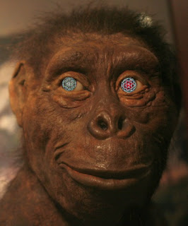 Lucy the extinct ape with kaleidoscope eyes was not our ancestor
