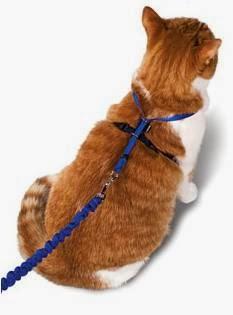 arnés-gato-seguridad