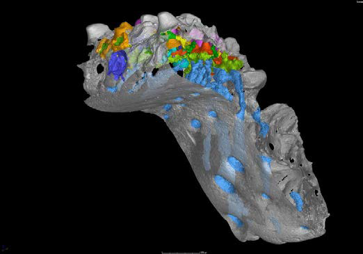 The first hard evidence for the 'outside-in' theory of the origin of teeth