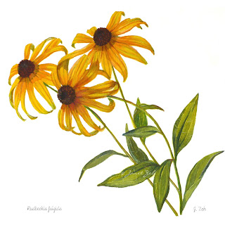 Rudbeckia flowers watercolor print