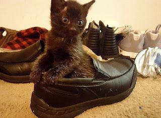 靴が大好きな可愛い猫3
