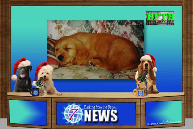 BFTB NETWoof News Desk with anchor dogs wearing Santa hats