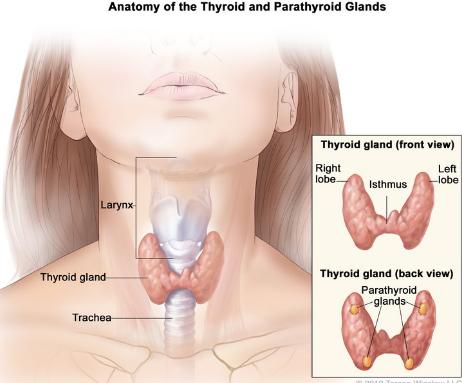 Thayroid Kitne Trh Ka Hota Hai,