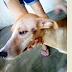 Após passar por tratamento, cadela fica irreconhecível e vai para adoção na cidade de Patos