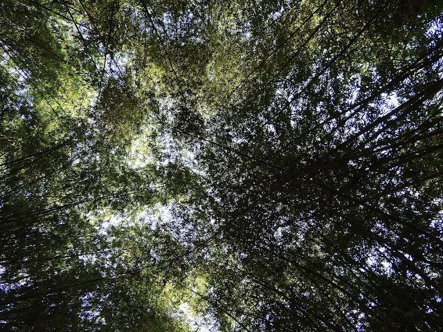 bamboo, assam, northeast, dibrugarh