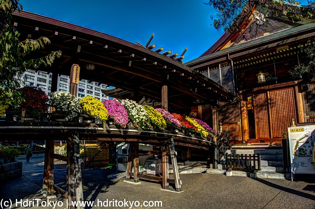 roofed passage at yushima tenjin shrine with chrysanthemums