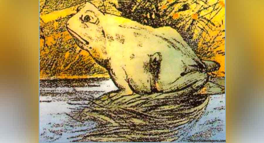 ¿Qué viste primero la rana o el caballo?