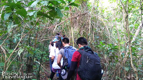 Mt. Daraitan's bushy trail