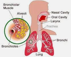 Obat untuk Melancarkan Sistem Pernafasan