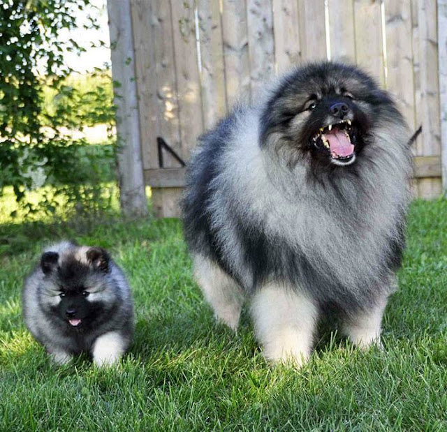 Dogs - What is the best dual for you?