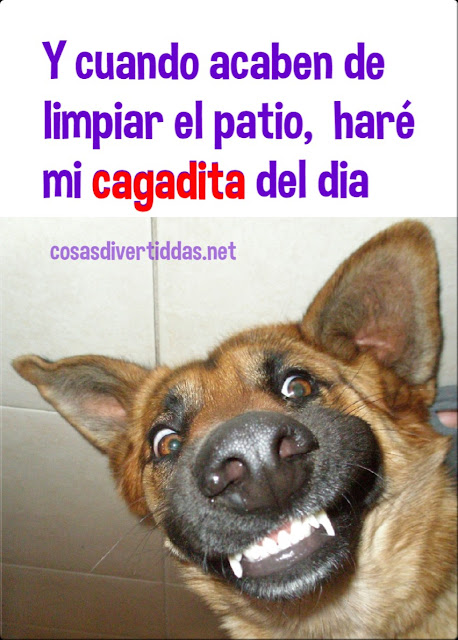Humor meme perro guarro