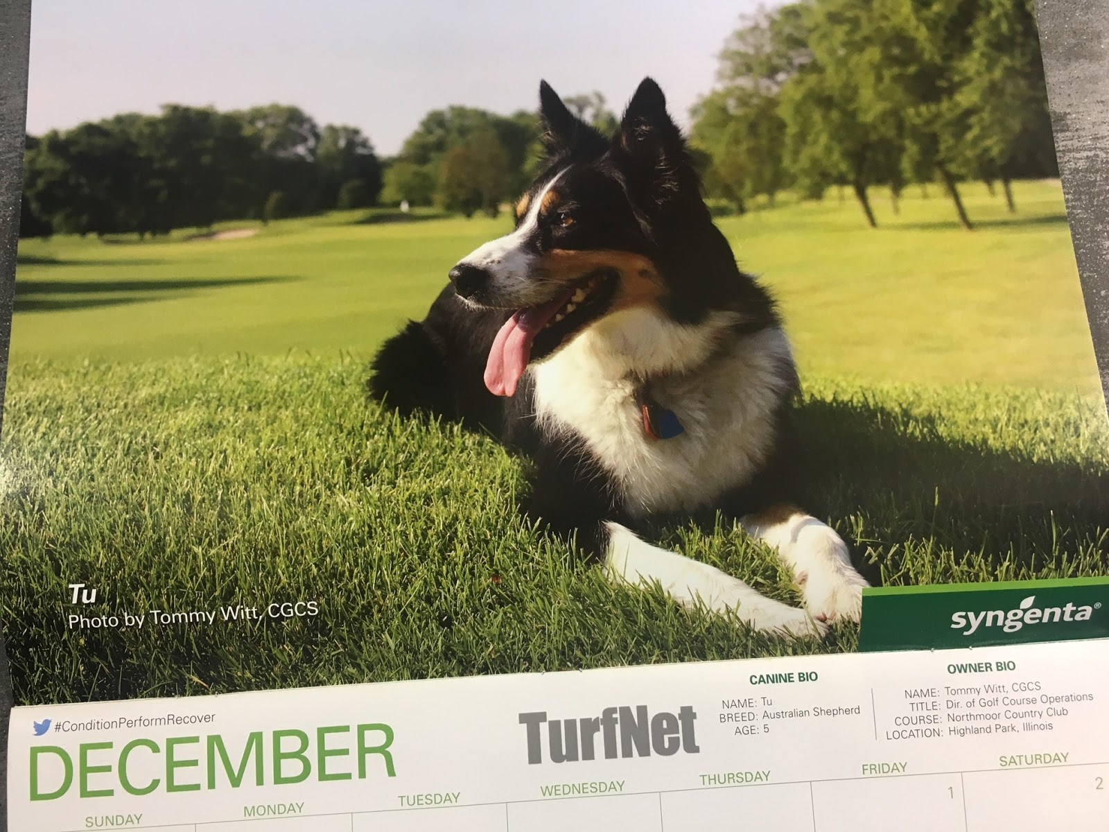 she was also recently chosen to be the december poster pet for the month of december for a nationally published golf course management calendar