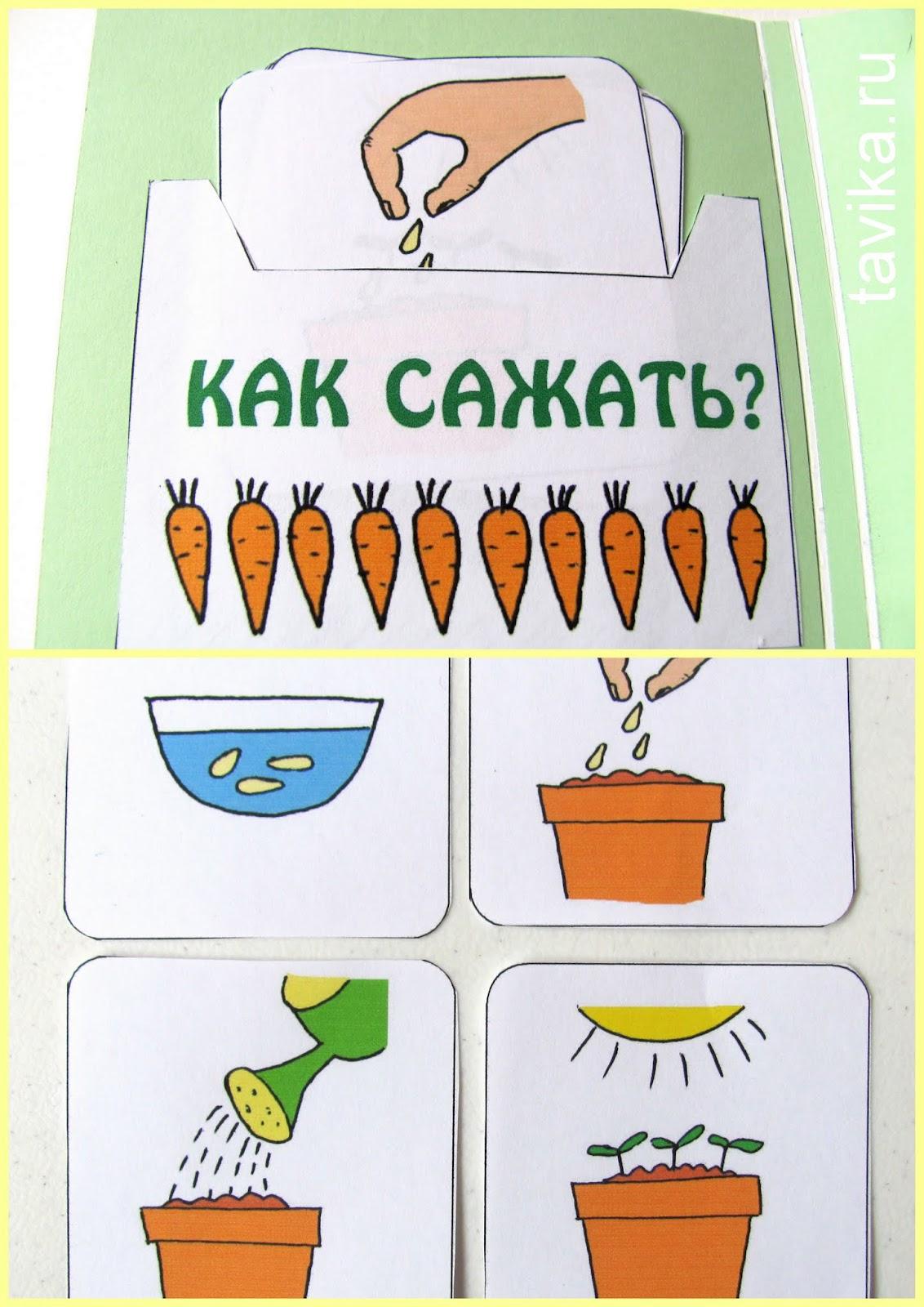 "lapbook ""My garden"""