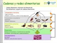 http://image.slidesharecdn.com/ecosistemas-cadenasyredesalimntarias-130623170743-phpapp02/95/ecosistemas-cadenas-y-redes-alimentariasicvc-5-638.jpg?cb=1372007382
