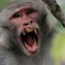 BBC!!Αδιανόητη τραγωδία!!Μαϊμού μπήκε σε σπίτι, άρπαξε βρέφος μόλις 12 ημερών το οποίο θήλαζε εκείνη την ώρα και το σκότωσε!!