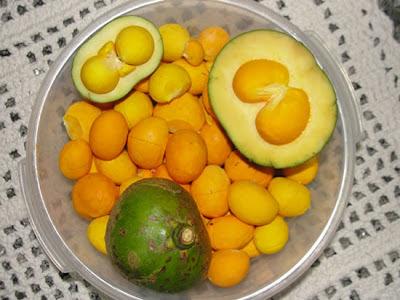 Pequi - Conheça motivos para consumir esta fruta do cerrado