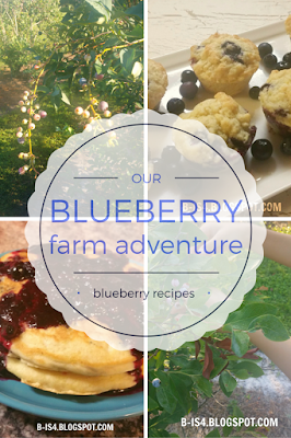 Blueberry Farm and Blueberry Recipes