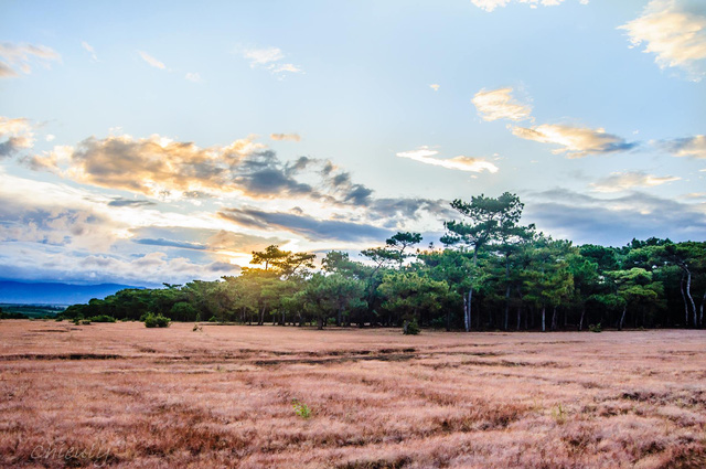 đồi cỏ hồng pleiku gia lai - cảnh đẹp hút hồn tại gia lai - du lịch gia lai pleiku