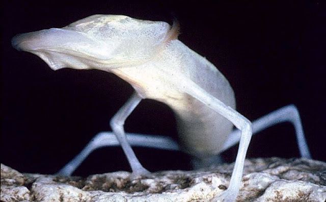 Cool Goby Blog: Collection of Cave Dwelling Fish and ...