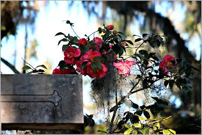 February 22, 2019 Touring Bonaventure Cemetery in Savannah GA
