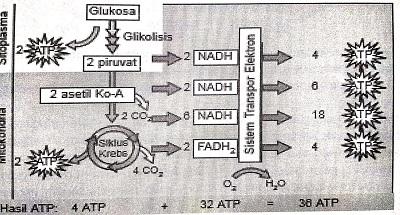 Materi Metabolisme (Rangkuman SBMPTN)