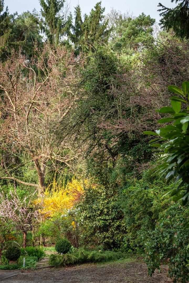 Carol S Garden: On Botanical Photography