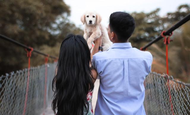 Most Loyal Dog Breeds, Most Loyal Dogs