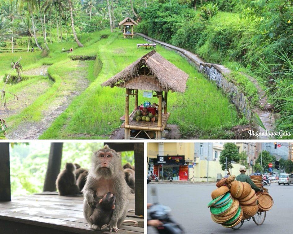 Arrozales en Bali, Monos en Ubud y la cotideanidad de Vietnam