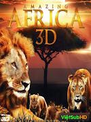 Động Vật Hoang Dã Châu Phi
