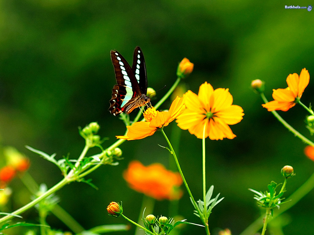 Les Plus Beau Fond Ecran Fleurs | Fond Ecran Pc