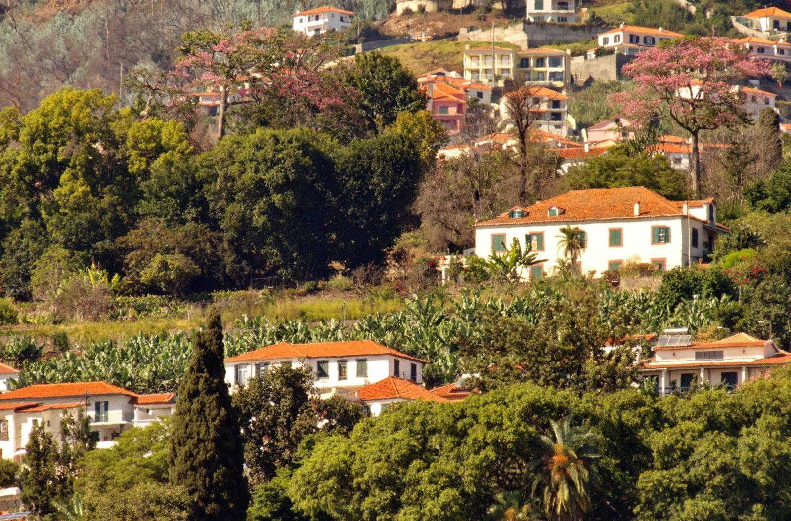uma quinta madeirense