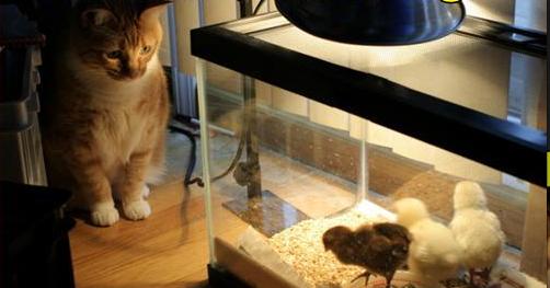 Dia Internacional do Gato é celebrado nesta terça-feira.