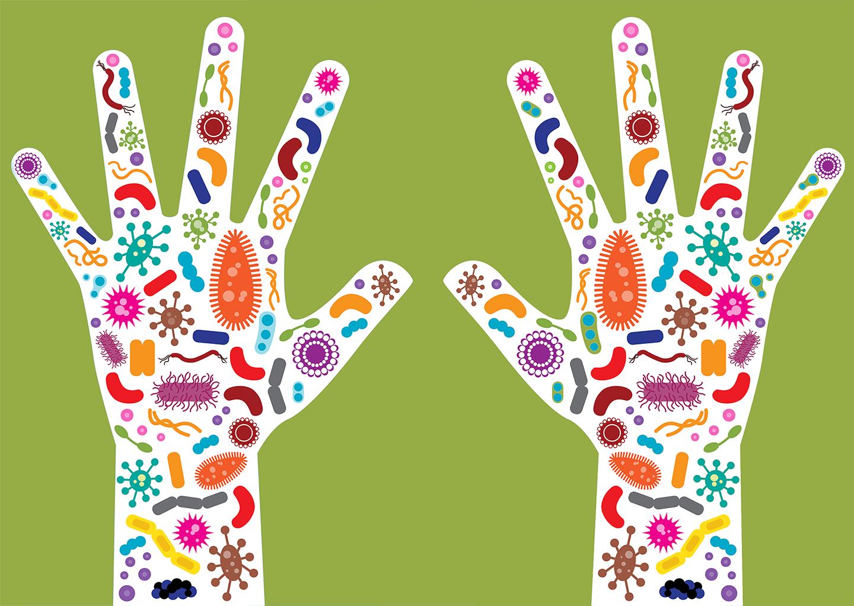 tipos de bacterias y cuales encontramos en la piel