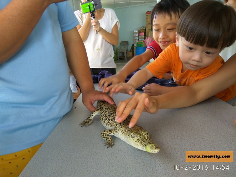 Meet 155 years old crocodiles @ Teluk Sengat Crocodile Farm