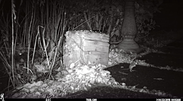 wood mouse browning trail camera