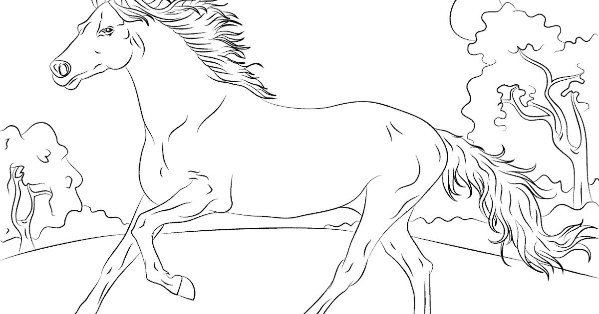 ausmalbilder pferde  ausmalbild pferd nr 17