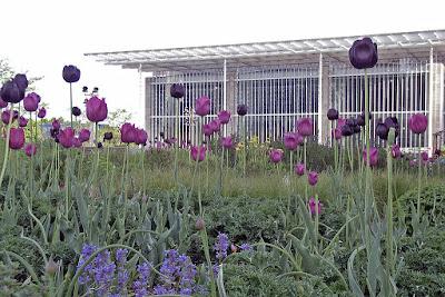 Tulipanes en Laurie Garden