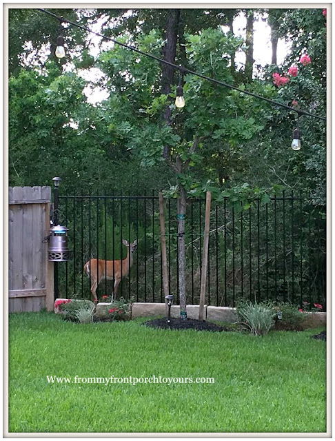 Suburban Farmhouse Backyard-Deer-Wild Life-Country Garden- From My Front Porch To Yours