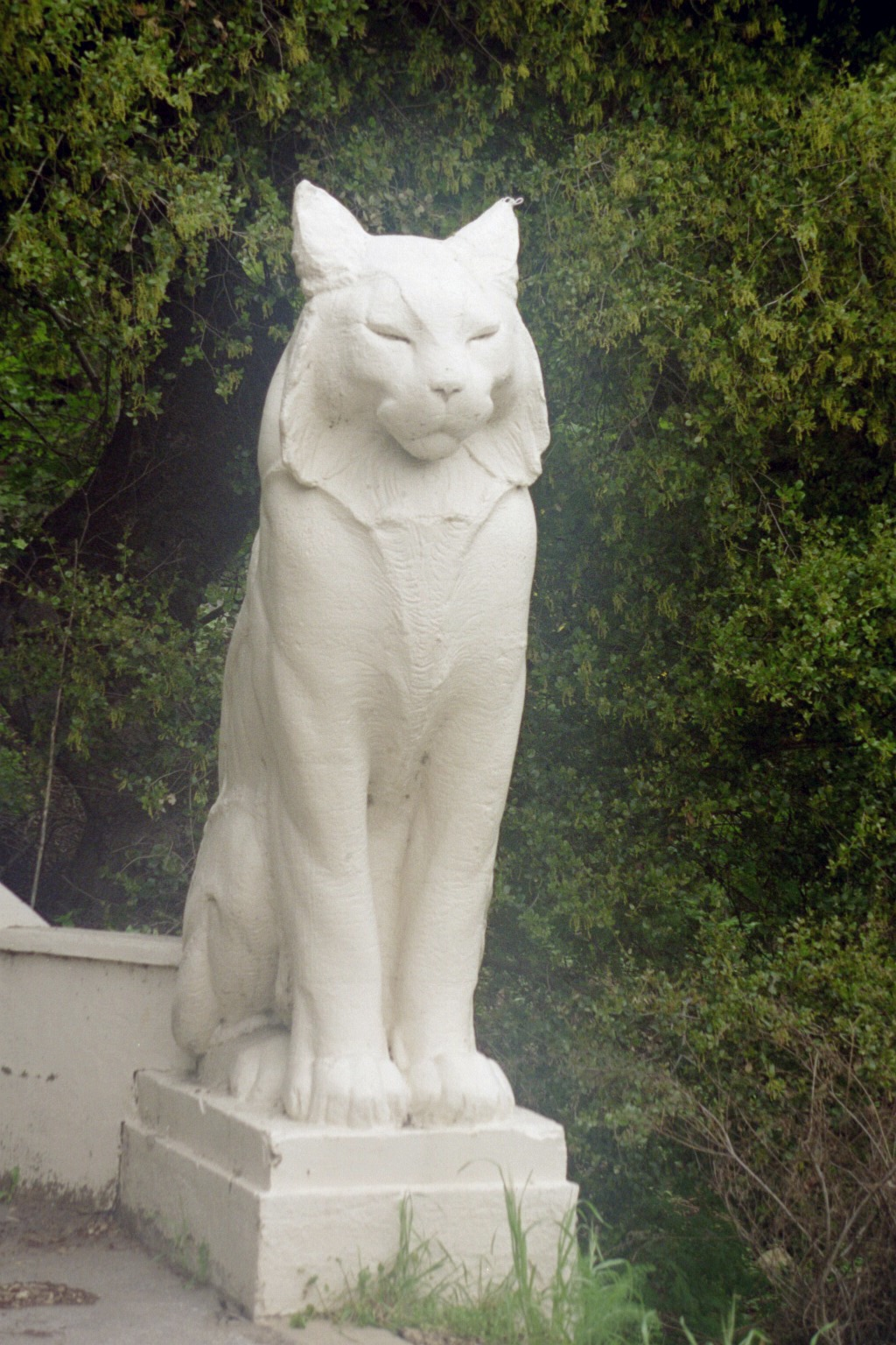 Tour Northern California Humboldt Nation The Cats