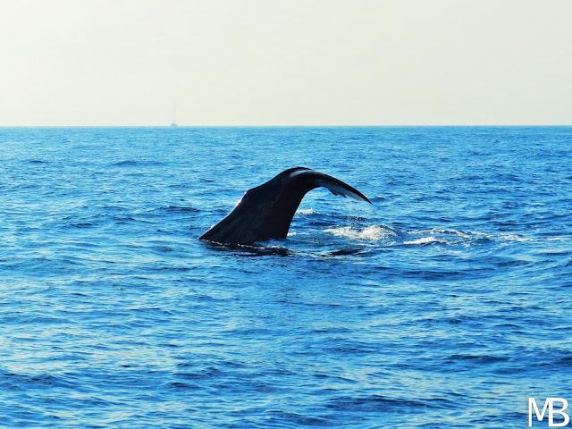 balena isole eolie mediterraneo