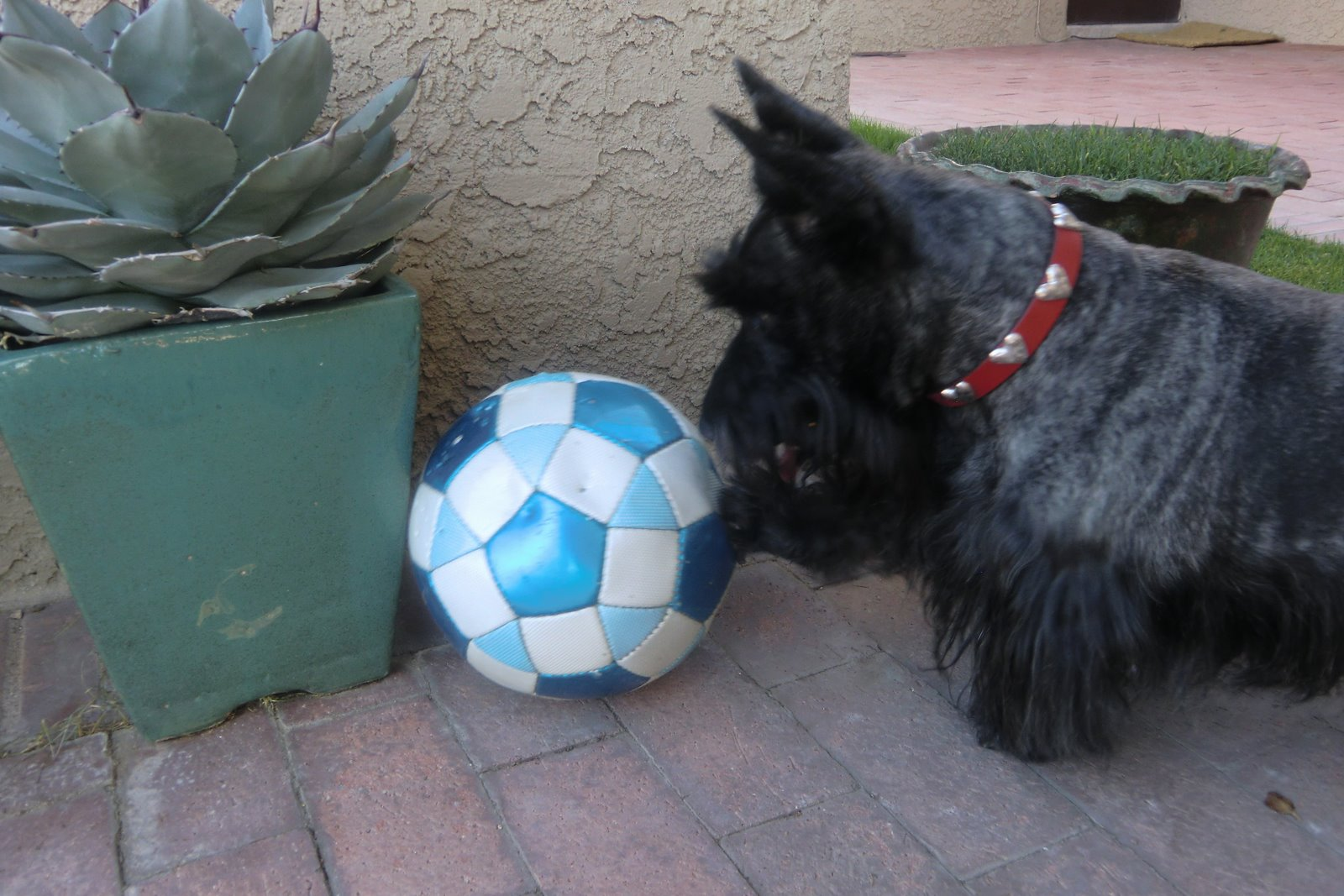 Two Little Square Black Dogs Square Dog Friday Soccer Other fast, easy to use online scrabble cheat and scrabble word finder. two little square black dogs square dog friday soccer