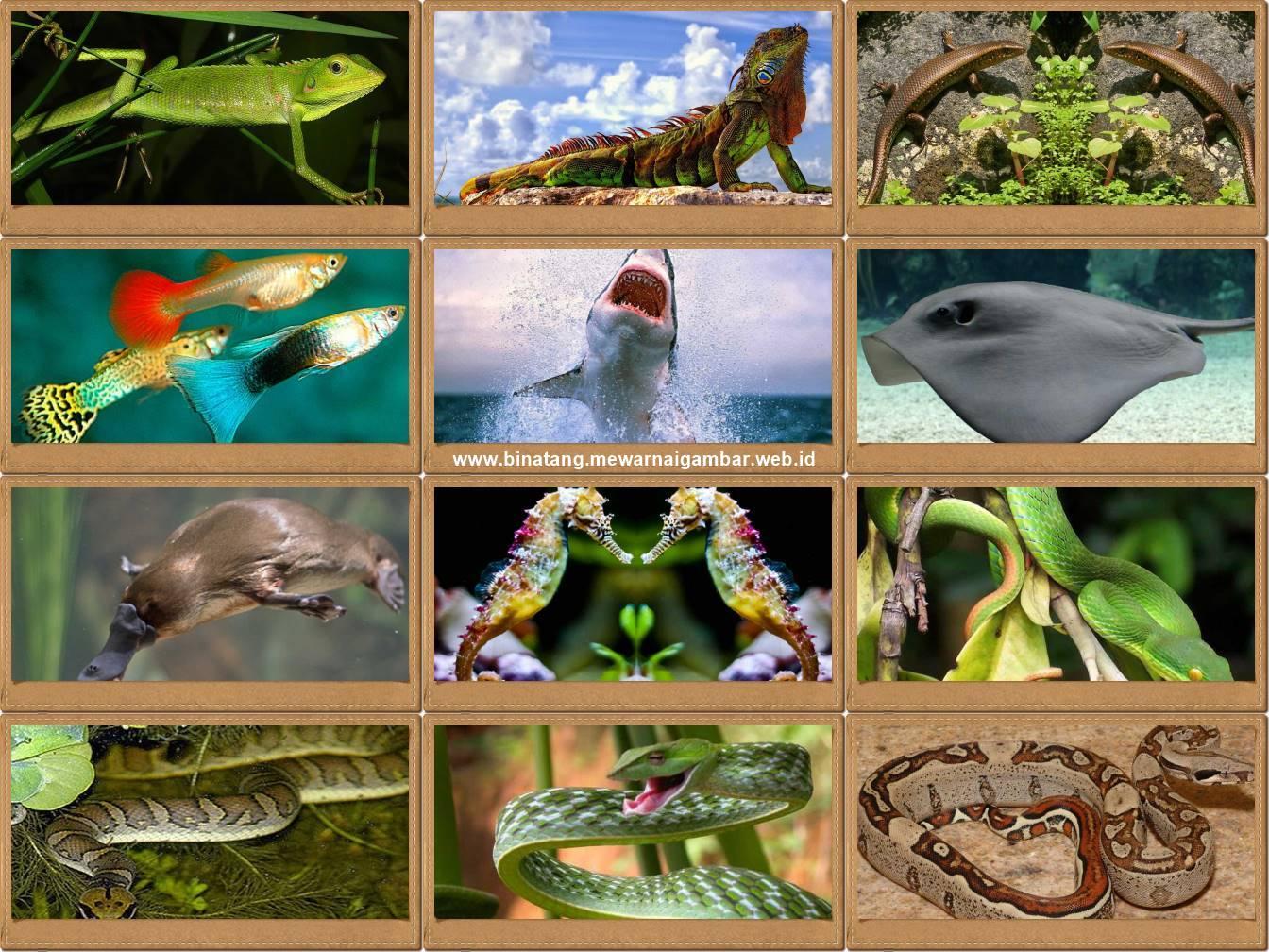 8400 Koleksi Gambar Hewan Ovipar Beserta Namanya Terbaru