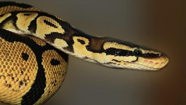 Python - A 3-step process to Master Python 3 + Coding Tips