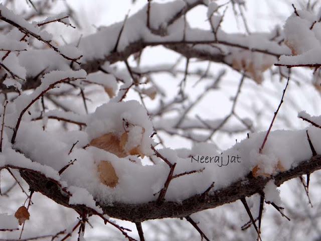 जांस्कर घाटी में बर्फबारी