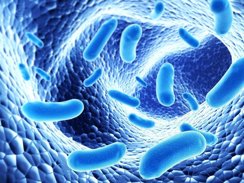 Gambar Garam Ikan Untuk Membunuh bakteri